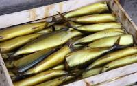 Рыба холодного копчения