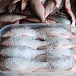 Рыба в засолке перед копчением
